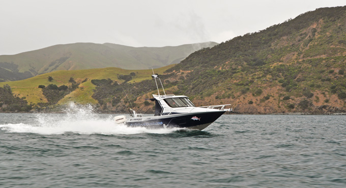 FISHING CHARTER & SCENIC TOURS